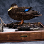 blackduck_001-2