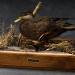 blackduck_003-2