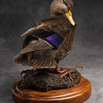 blackduck_004-2