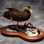 blackduck_005-2