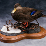 blackduck_007-2