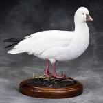 whitegoose_005